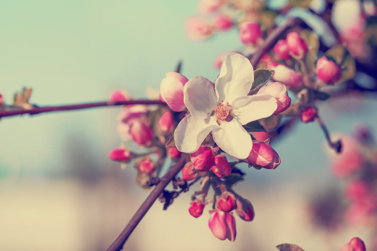 Start Counselling. blossom-fw